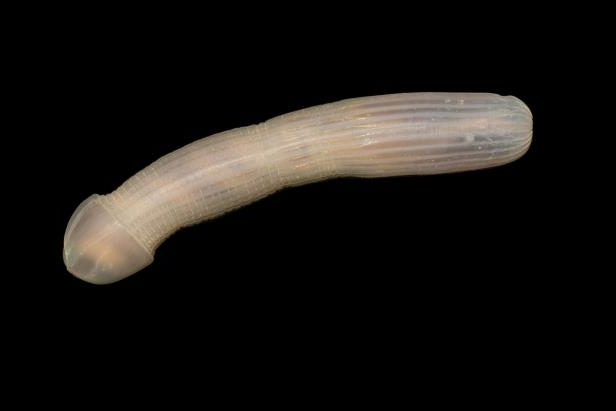 Technology: New deep sea creatures have     unusual shapes