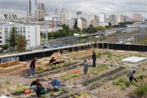 Post office workers grow vegetables, breed chickens on Paris rooftop 'farm'