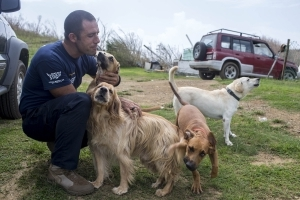 Volunteer pilots are flying planeloads of dogs and cats out of Puerto Rico