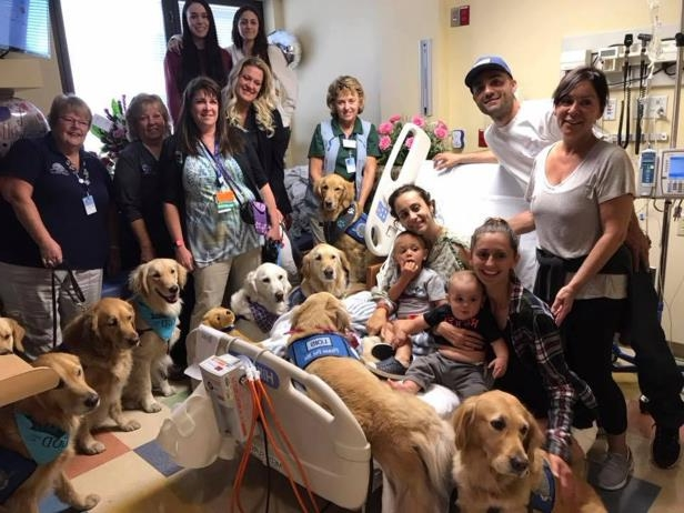 LCC K-9 Comfort Dogs These are trained Comfort Dogs for @lccharities. They interact with people at churches, hospitals, events and in disaster situations.