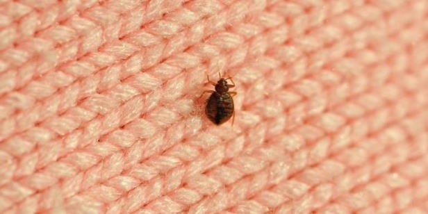 9 common myths about bedbugs and how to get rid of them