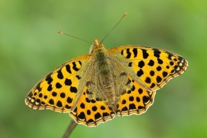 Butterfly smugglers jailed in China
