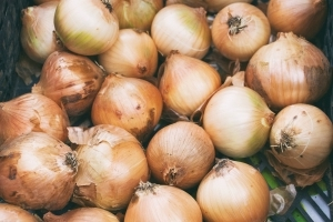 Could onions be the cause of your tummy trouble?