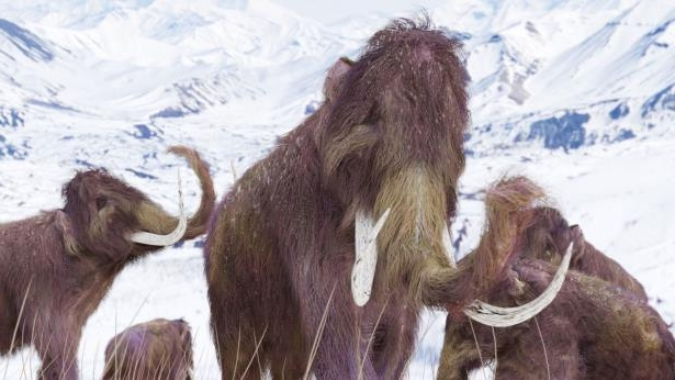Tech & Science : Ice Age woolly mammoth family go on sale