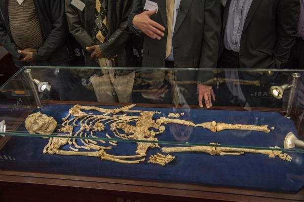 The Little Foot fossilised hominid skeleton is the most complete example of a human ancestor older than 1.5 million years yet discovered: The Little Foot skeleton is the most complete example of a human ancestor older than 1.5 million years yet discovered.