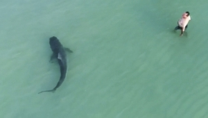 Watch: Shark filmed just feet from swimmers in Miami