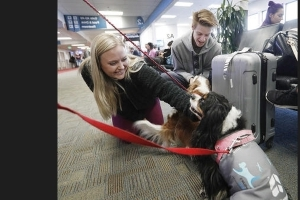 Airport tries to ease holiday travel anxiety by letting the dogs out