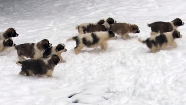 Russian Army Reveals Its Latest Weapon: Very Cute Puppies