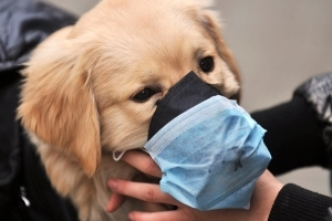 First 2 cases of canine influenza confirmed in Canada