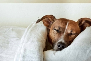 Here's why sleeping with dog is actually good for you