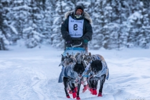 Necropsy indicates Yukon Quest sled dog died of aspiration