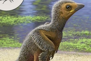 Baby Bird Fossil is One of The Smallest Ever Discovered