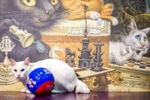 Achille le chat, pronostiqueur officiel de la Coupe du monde 2018