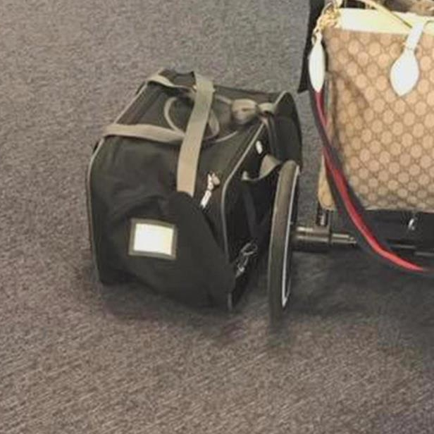 a bag of luggage sitting on top of a suitcase: b3-kvc-dog-and-united-newspath-frame-397.jpg