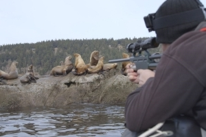 Sea lion near Vancouver Island rescued, cut free from rope