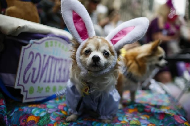 A dog at the annual Easter parade in New York.