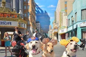 Very Good Puppies Training to Be Assistance Dogs Take Ridiculously Cute Field Trip to Disneyland