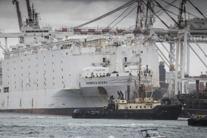 Australia vows investigation after 2,400 sheep die aboard 'death ship'
