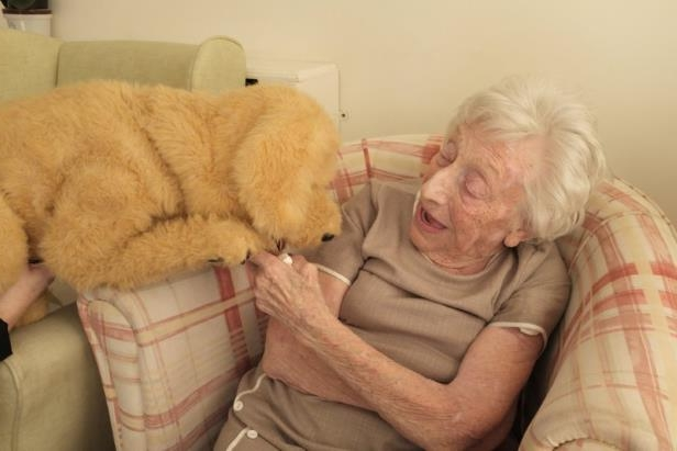 Tech & Science : Robot dog lends a helping paw to dementia