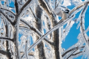 Ice storm cleanup begins in Southwestern Ontario