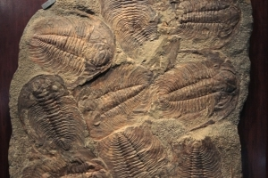 475-Million-Year-Old Sea Creature Fossil Found Intact