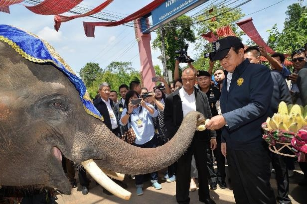 Thai junta leader Prayut Chan-O-Cha feeds an elephant during a swing through the northeast
