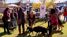 a group of people walking a dog: Welcome to Dating with Dogs - a new social event held in Canberra to help like-minded people meet as their furry friends do all the matchmaking