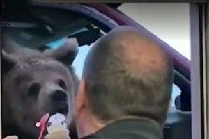 Zoo in trouble after taking bear out for ice cream