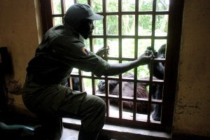 Guard killed, 3 kidnapped in DRCongo's Virunga park