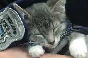 Cat named Pawfficer Donut to serve with police