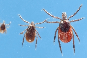 7 new tick viruses to worry about with 'big epidemic' of bugs in much of the country