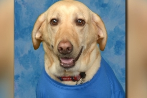 Beloved service dog honored in elementary school yearbook
