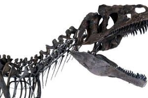 Scientists Cry Foul As Skeleton Of Mystery Dino Is Auctioned Off For $3 Million