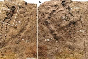 World's Oldest Footprints Unearthed in China