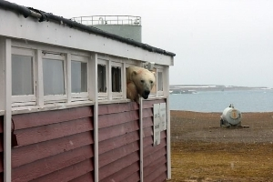 Cupboard left BEAR! Cheeky beast pokes its head out of a store room after raiding supplies in Norway