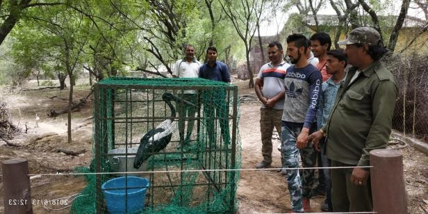 a group of people standing next to a fence: The rescued stork was being kept in a cage at a national park in Gurgaon on June 13 until it was fit to be released into the wild.