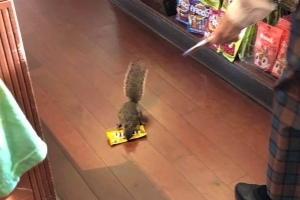 Watch This Squirrel Become the Cutest Little Thief You've Ever Seen by Stealing M&Ms From Disney World