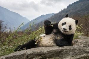 Long-Lost Panda Relative Revealed by 22,000-Year-Old Fossil