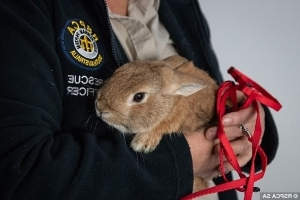A hare-y situation! Rabbit inside a Lorna Jane bag left in a women's bathroom sparks an airport bomb scare