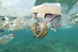 Australian supermarkets work to prevent 'bag rage' as plastics ban takes effect