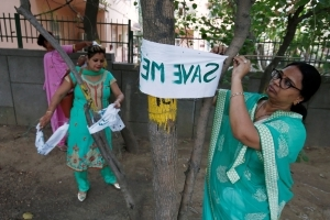 Green panel stays felling of trees in Delhi till July 19
