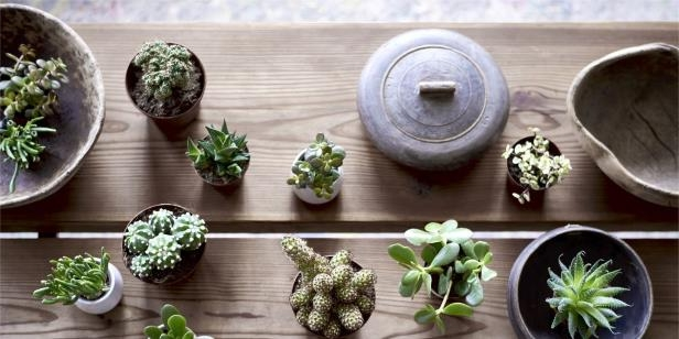 Plants need plenty of care and attention to thrive, and they can be prone to feeling the nasty effects of any extreme weather conditions – especially in the summer during a heatwave. Take a look at the few houseplants that thrive in the heat.: 5 houseplants that thrive in heat