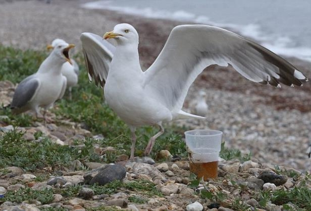 a flock of seagulls standing next to a body of water: The RSPCA has asked people to be careful with their alcohol to save the wildlife