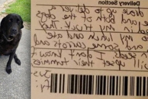 Dogs steal mail carrier's lunch, then their apology note goes viral