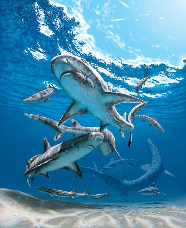 Prehistoric sharks who ate marine reptiles went extinct when their food source also went extinct 66 million years ago.