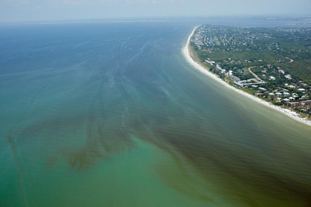 a view of the ocean: Red tides began coloring Florida's waters in October 2017, and there's no signs that the toxic plume will lift antytime soon.