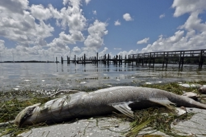 Florida Gov. Rick Scott Declares State of Emergency Amid Red Tide Crisis