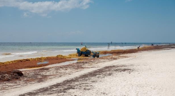 Travel: Mexico Combating Seaweed Issues Along Caribbean Coast