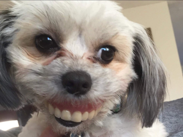 offbeat this dog stole a human pair of dentures and the photos