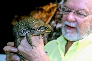 Cane toad DNA puzzle finally cracked